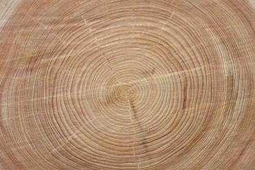 しもで木材って(。´・ω・)? ぱーと3