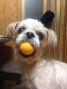 やっぱり可愛い愛犬ぼたん(●´ω`●)