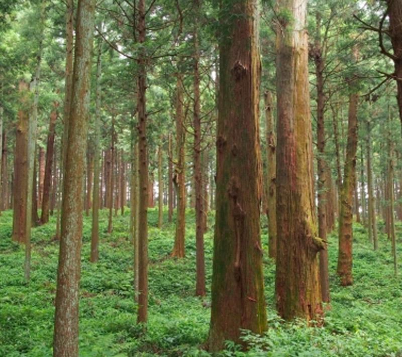 しもで木材|会社案内3